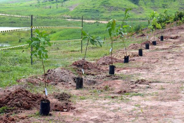 Termo de Compromisso de Recuperação Ambiental