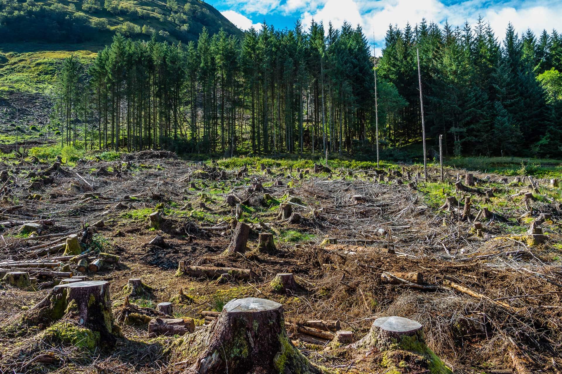 Regularização-Ambiental-Rural-TEXTO