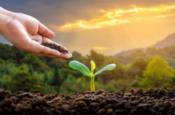 Como-investir-em-negocios-verdes