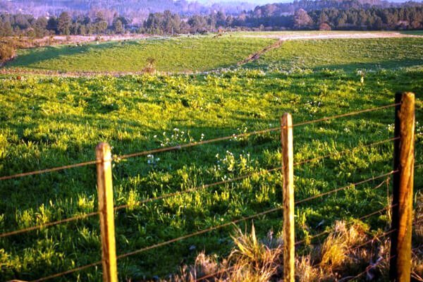 Licenciamento-ambiental-rural