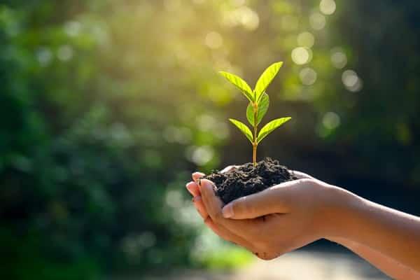 O que faz uma consultoria ambiental