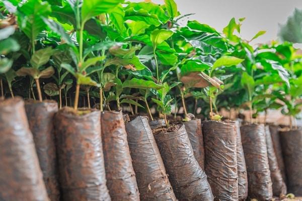 Plantio de Mudas Nativas para Termo de Compromisso Ambiental