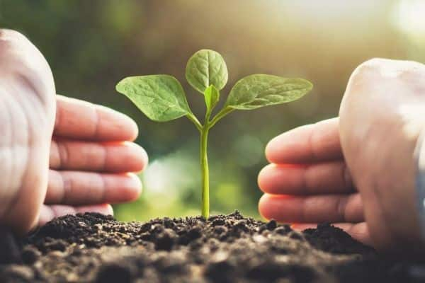 A importância do reflorestamento em propriedades rurais