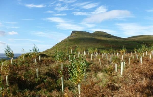 Qual a Importância da Manutenção em Áreas de Reflorestamento