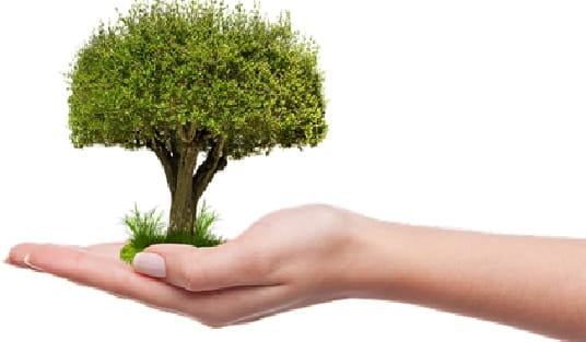 Manutencao-em-Areas-de-Reflorestamento
