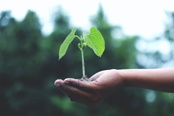sustentabilidade-e-meio-ambiente