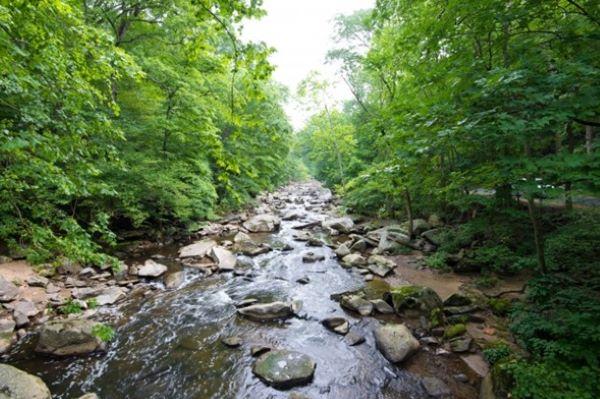 O-que-faz-um-órgão-de-fiscalização-ambiental
