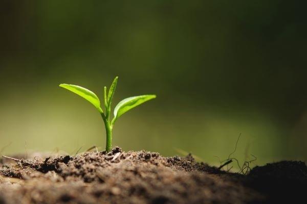 cinco-razoes-para-conservar-o-solo