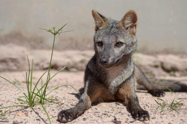 Fauna-brasileira-tem-mais-de-100-mil-especies